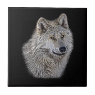 Silver Grey Wolf Wildlife Portrait Tile