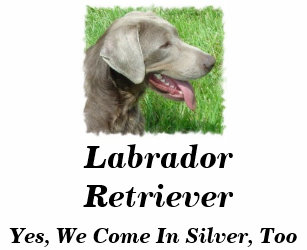Silver Lab Gifts on Zazzle