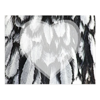 Silver Lace Feathers Postcard