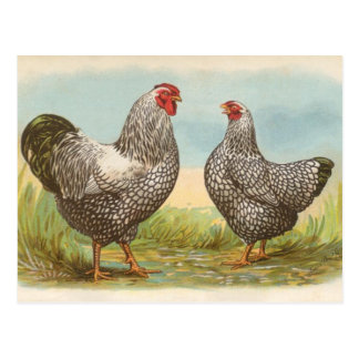 Silver Laced Wyandottes Post Cards