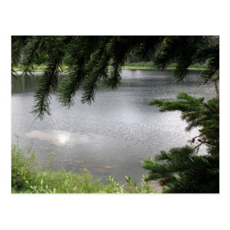 Silver Lake Framed by Evergreen Boughs Postcard