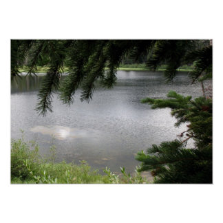 Silver Lake Framed by Evergreen Boughs Poster