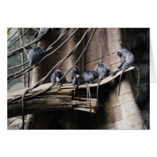 Silver Langur Monkey Troop with Baby Card
