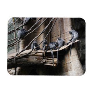 Silver Langur Monkey Troop with Baby Magnet