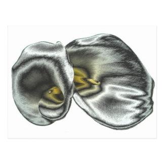 Silver Lilies Postcard