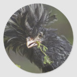 Silver Polish Rooster Classic Round Sticker