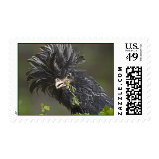 Silver Polish Rooster Stamp