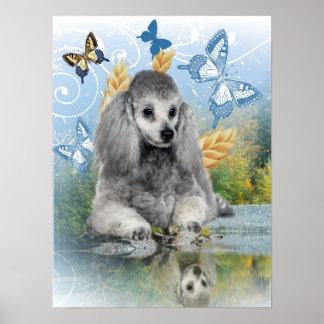 Silver poodle enjoys reflection poster