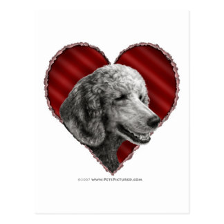 Silver Poodle with Heart Postcard
