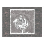 Silver Rose Post Card