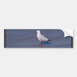 Silver Seagull Car Bumper Sticker