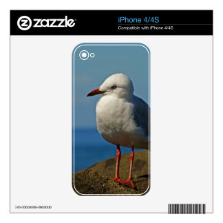 Silver Seagull Decal For The iPhone 4S