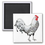 Silver Spangled Hamburg Rooster Magnet
