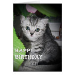 Silver spotted - Kitten Birthday Card