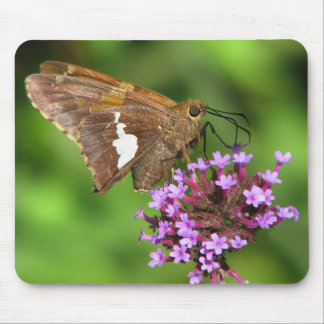 Silver Spotted Skipper Butterfly on Flowers Mouse Pad