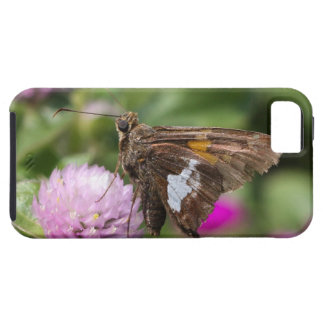 Silver-spotted Skipper iPhone 5 Case