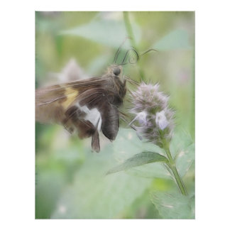 Silver-Spotted Skipper On Agastache Print