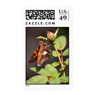 'Silver Spotted Skipper on Rose Bud' Postage Stamp