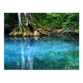 Silver Springs River Postcard