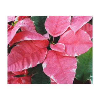 Silver Star Marble Poinsettias Pink Holiday Floral Canvas Print