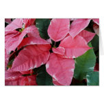 Silver Star Marble Poinsettias Pink Holiday Floral Card