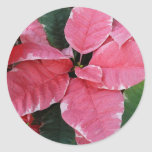Silver Star Marble Poinsettias Pink Holiday Floral Classic Round Sticker