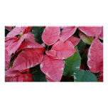 Silver Star Marble Poinsettias Pink Holiday Floral Poster