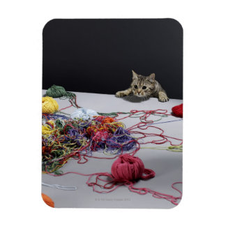 Silver tabby cat climbing over edge of table magnet