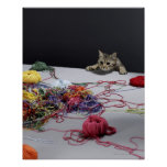 Silver tabby cat climbing over edge of table poster