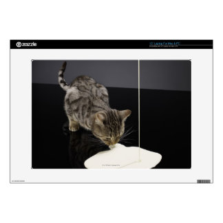 "Silver tabby cat drinking cream from floor decal for 15"" laptop"