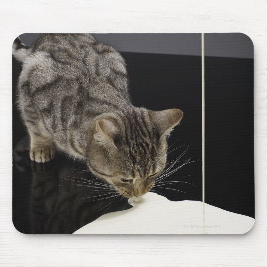 Silver tabby cat drinking cream from floor mouse pad