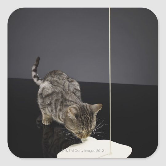 Silver tabby cat drinking cream from floor square sticker