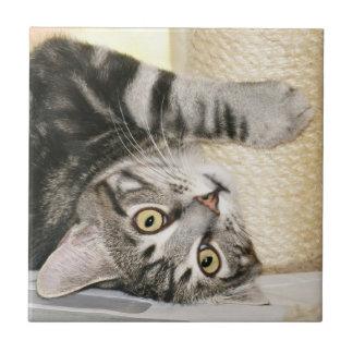 Silver tabby cat face tile