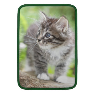 Silver Tabby Kitten with White Paws MacBook Sleeve