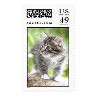 Silver Tabby Kitten with White Paws Postage