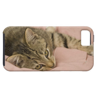 Silver tabby stretched out on bedspread iPhone SE/5/5s case
