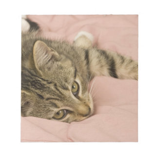 Silver tabby stretched out on bedspread note pad