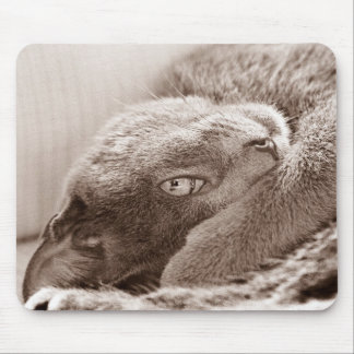 Silver the Cat Mousepad