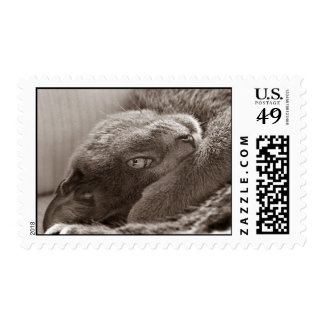 Silver the Cat Postage