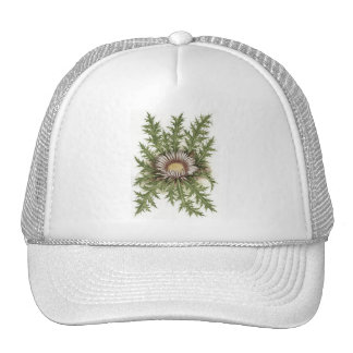 Silver Thistle Collection Mesh Hats