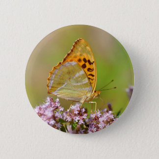 Silver-washed Fritillary butterfly on flower Button