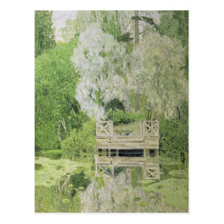 Silver White Willow 1904 Postcards