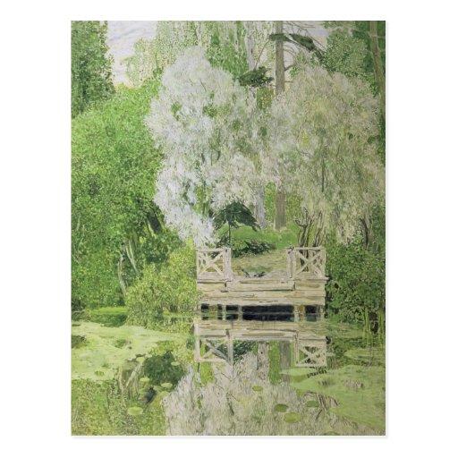 Silver White Willow, 1904 Postcard