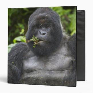 Silverback del gorila y del envejecimiento de mont