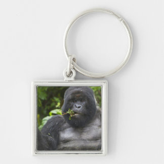 Silverback del gorila y del envejecimiento de mont llavero