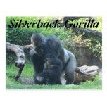 Silverback Gorilla # 1 Postcard