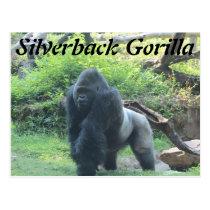 Silverback Gorilla # 2 Postcard