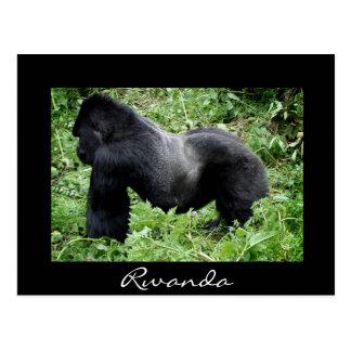 Silverback gorilla black Rwanda postcard