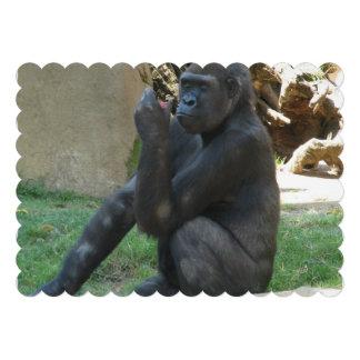 Silverback Gorilla Announcement
