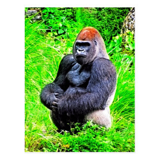Silverback Gorilla Photo Painting Postcard